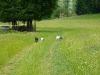 jagsttalwiesenwanderung2011-884